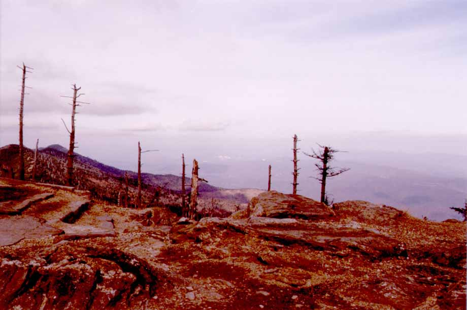 Mount Mitchell again.... Acid rain or something is killing off all the ...